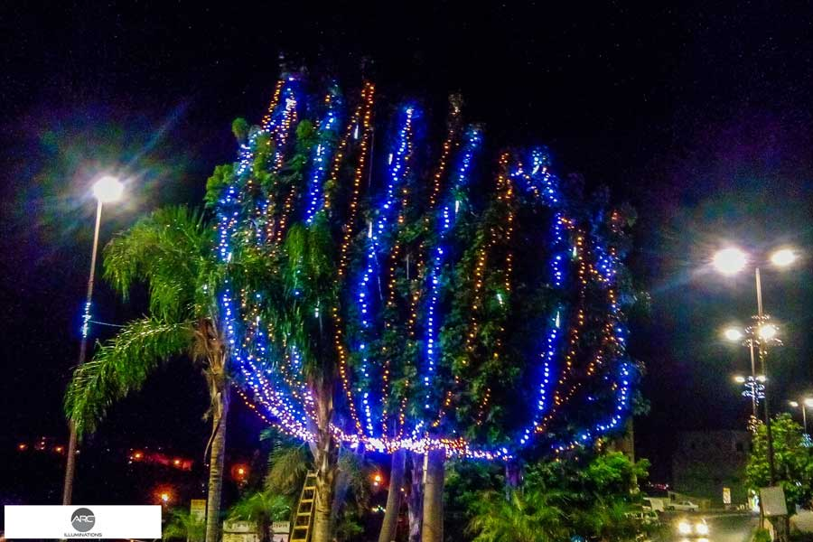 Lighting decorations for the city tree (6)
